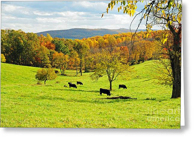 Greeting Card featuring the photograph Virginia Autumn by Olivia Hardwicke
