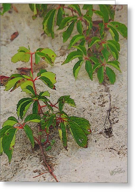 Virginia Creeper At The Beach Greeting Card