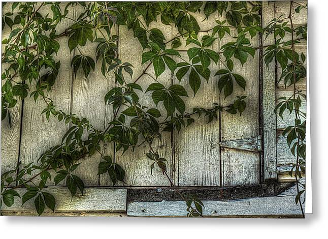 Virginia Creeper Greeting Card by William Fields