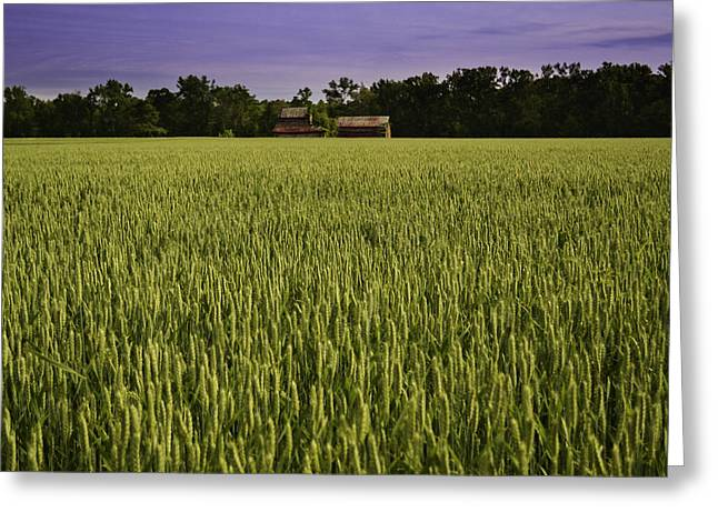Virginia Wheat Field Greeting Card