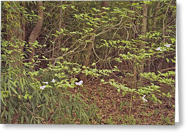 Virginia Woods Photo Greeting Card by Peter J Sucy