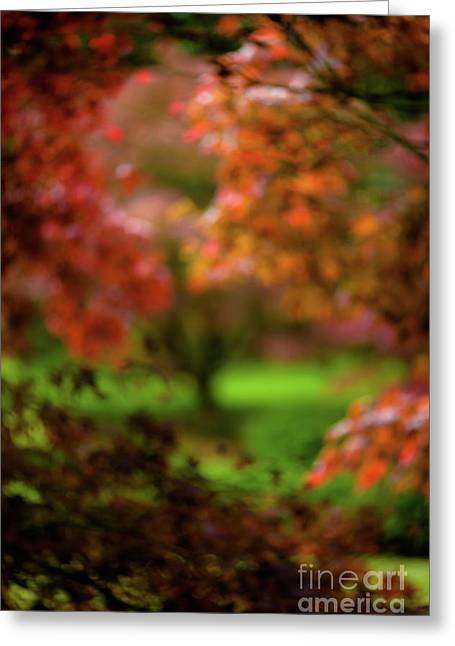 Visions Of Leaves Greeting Card