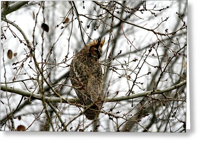 Visiting Owl 2 Greeting Card by Rebecca Adams