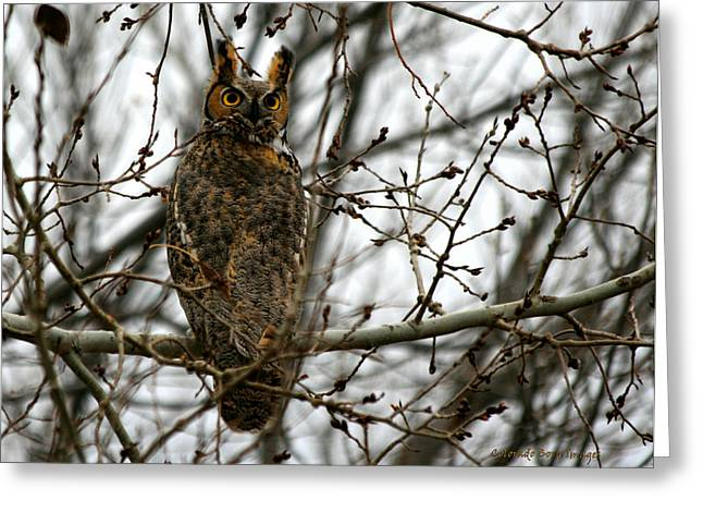 Visiting Owl Greeting Card by Rebecca Adams