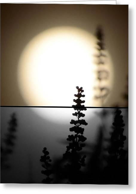 Greeting Card featuring the photograph Vitex Moon by Charlotte Schafer