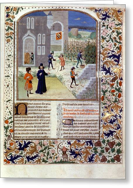 Viticulture, C1470 Greeting Card by Granger