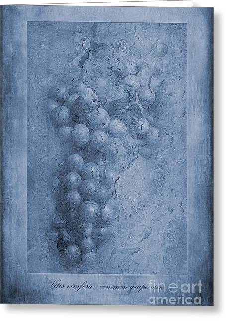 Vitis Cyanotype Greeting Card by John Edwards