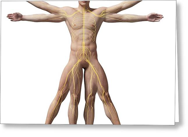 Vitruvian Man Nerves Greeting Card