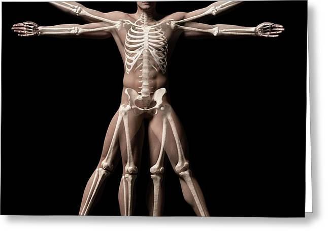 Vitruvian Man Skeleton Greeting Card