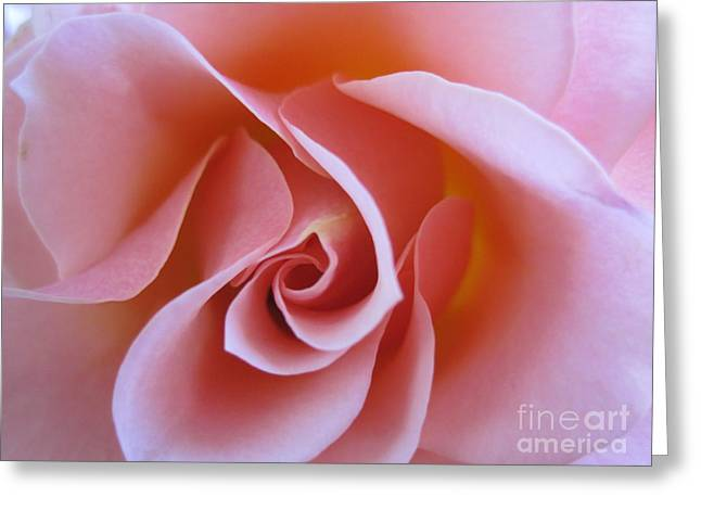 Vivacious Pink Rose Greeting Card