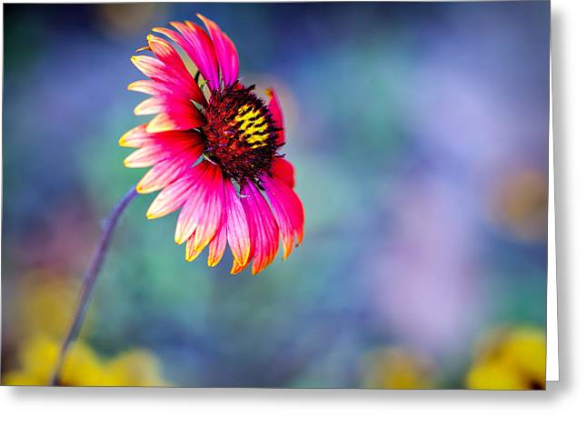 Vivid Colors Greeting Card by Tammy Smith