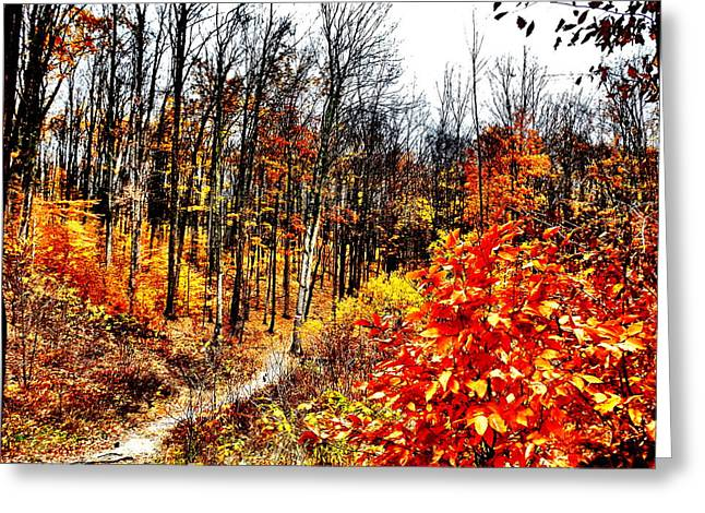 Vivid Pathway Greeting Card