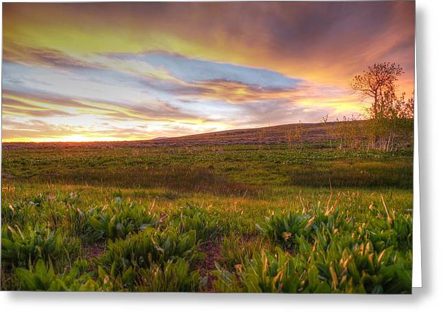 Vivid Sunset Greeting Card by Jenessa Rahn