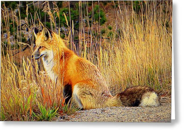Greeting Card featuring the photograph Vixen by Karen Shackles