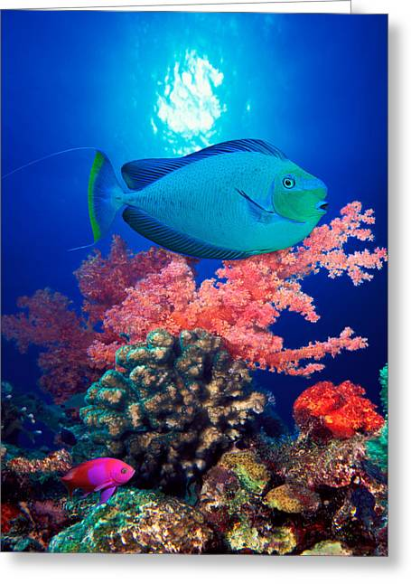 Vlamings Unicornfish And Squarespot Greeting Card by Panoramic Images