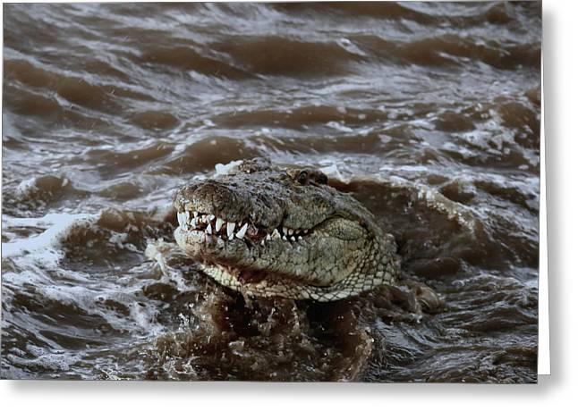 Voracious Crocodile In Water Greeting Card by Ramabhadran Thirupattur