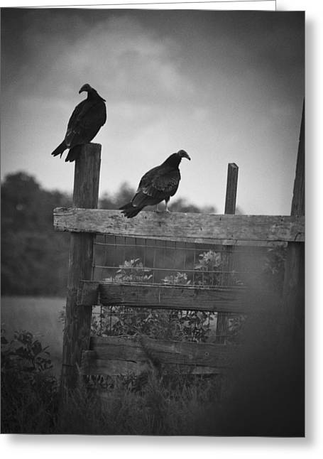 Vultures On Fence Greeting Card by Bradley R Youngberg