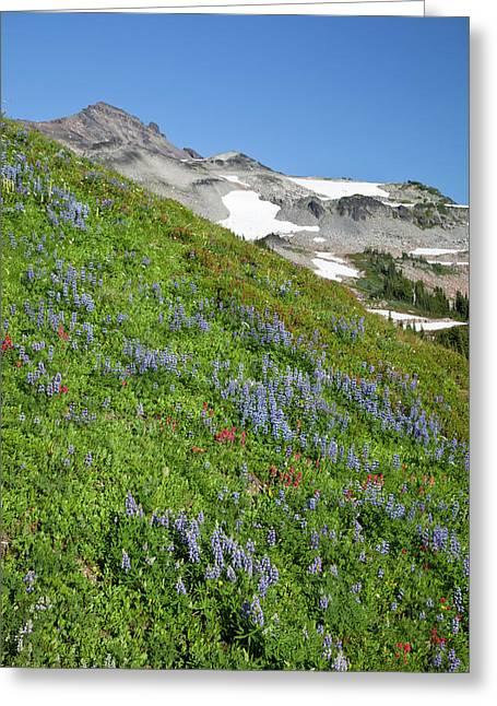 Wa, Goat Rocks Wilderness, Subalpine Greeting Card