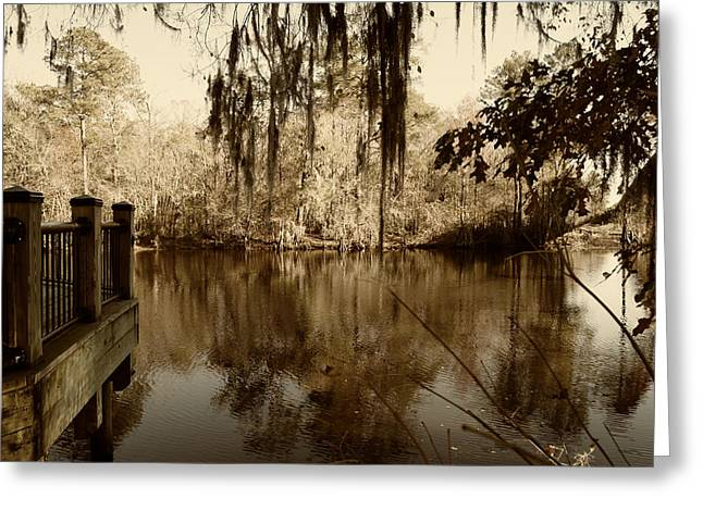 Waccamaw River In Autumn Sepia Greeting Card