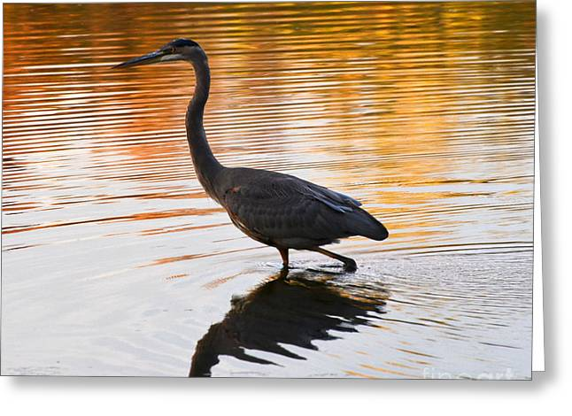 Wading For You Greeting Card