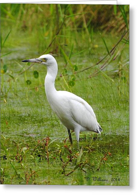 Wading Heron Greeting Card