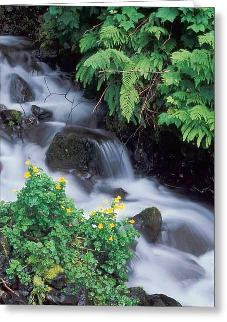 Wahkeena Creek Spring Greeting Card