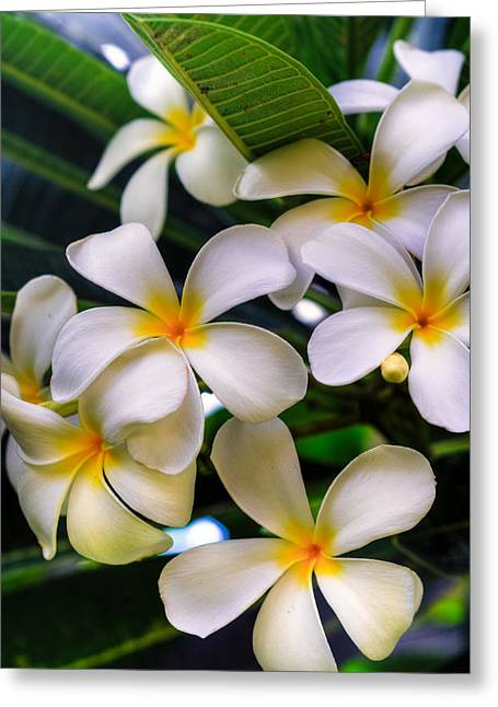 Wailea Plumerias Greeting Card by Kelly Wade