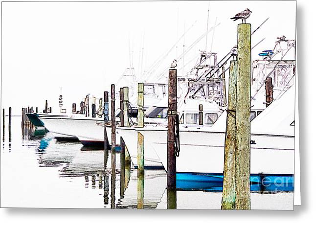 Waiting For Food - Outer Banks Greeting Card by Dan Carmichael