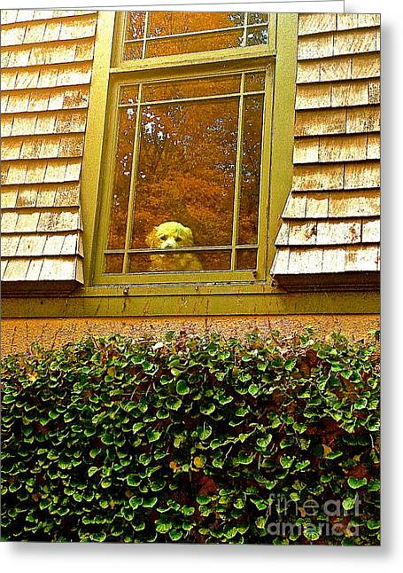 Waiting For Jesse Greeting Card by Delona Seserman