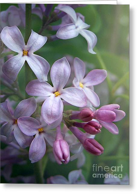 Waiting For Lilacs Greeting Card