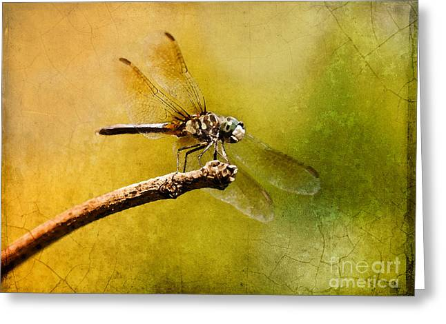 Waiting For My Date Greeting Card by Betty LaRue