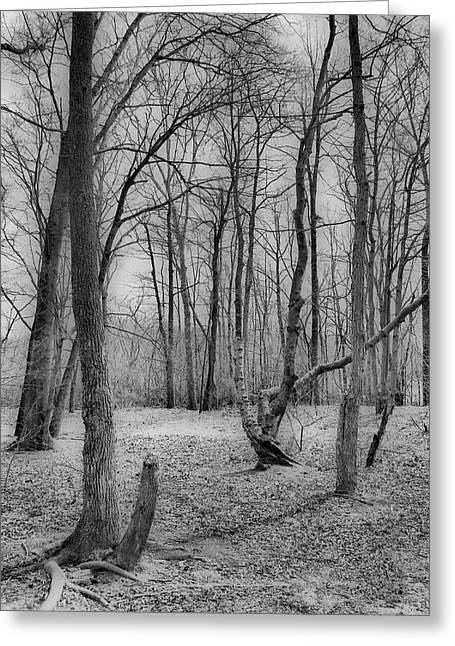 Waiting For Spring Greeting Card by Thomas  MacPherson Jr