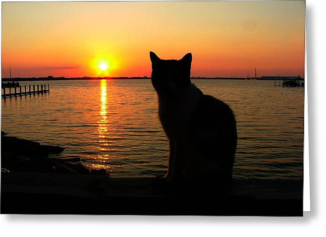 Waiting For The Shrimpers To Come In With Their Catch Greeting Card by Julie Dant