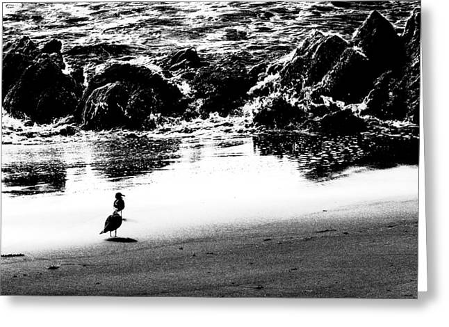 Waiting For Their Meal Black And White Greeting Card