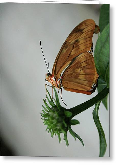 Greeting Card featuring the photograph  Butterfly Waiting On The Wind  by Cathy Harper