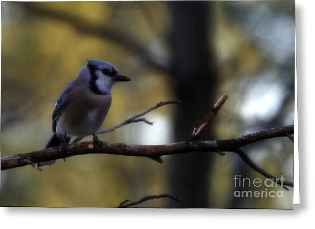Waiting Patiently Greeting Card by Amanda Collins