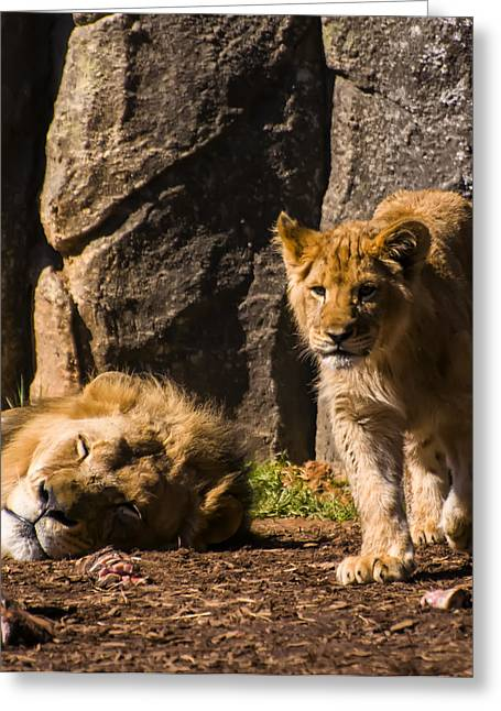 Waiting To Be King Greeting Card by Chris Flees