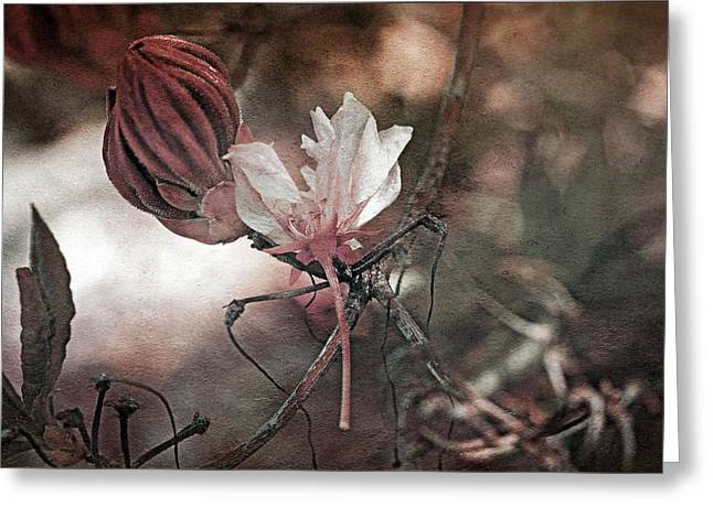 Waiting To Blossom Greeting Card by Bonnie Bruno