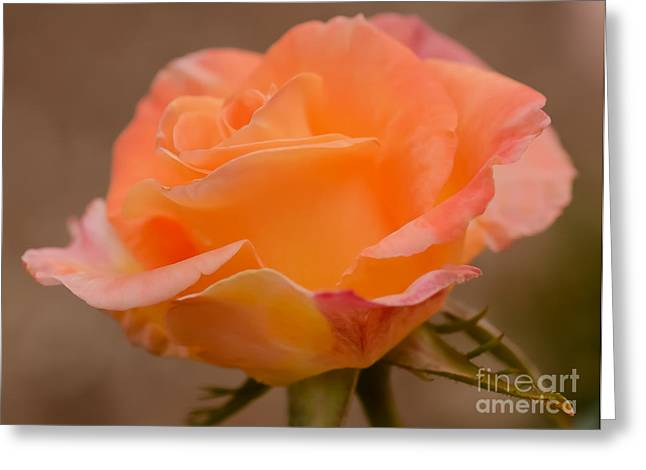 Wake Up And Smell The Rose Greeting Card by Nick  Boren