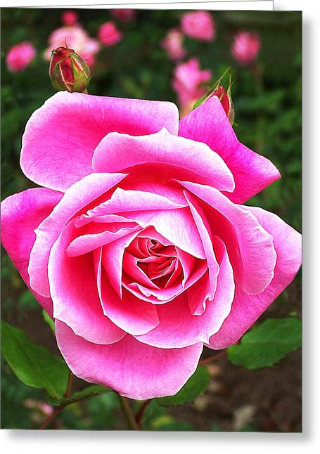 Wake Up And Smell The Roses Greeting Card