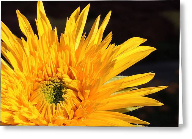 Waking Up Greeting Card by Teresa Schomig