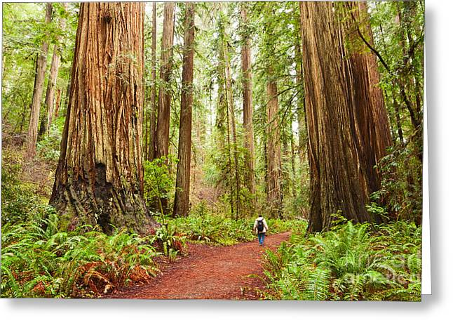 Walk Among Giants - Massive Redwoods Sequoia Sempervirens In Redwoods National Park. Greeting Card by Jamie Pham