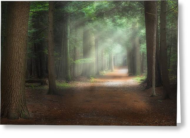 Walk In The Woods Greeting Card by Bill Wakeley