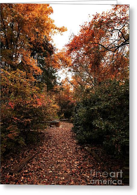 Walk In The Woods Greeting Card by John Rizzuto