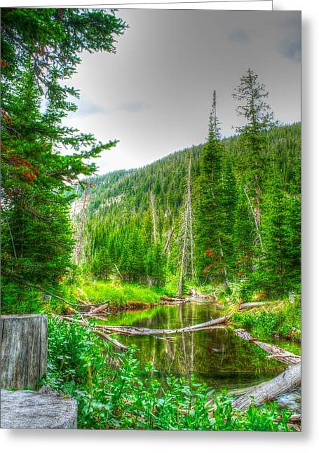 Greeting Card featuring the photograph Walk In The Woods by Kevin Bone