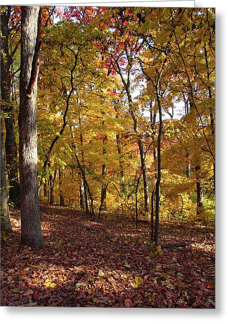 Walk In The Woods - Vertical Greeting Card