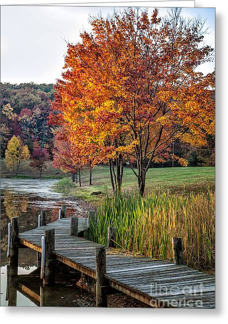 Walk Into Fall Greeting Card by Ronald Lutz