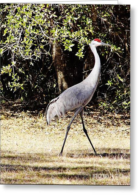 Walk On By Greeting Card by D Hackett