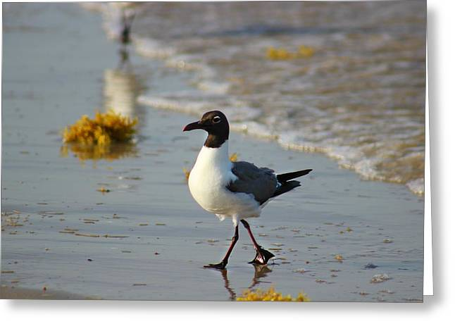 Greeting Card featuring the photograph Walk On The Beach by Candice Trimble