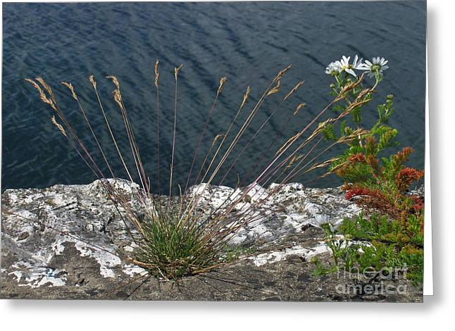 Greeting Card featuring the photograph Flowers In Rock by Brenda Brown